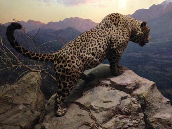 American Museum of Natural History 2 on Tatsuya Oe blog