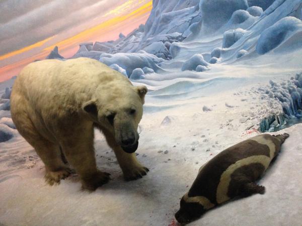 American Museum of Natural History 3 on Tatsuya Oe blog